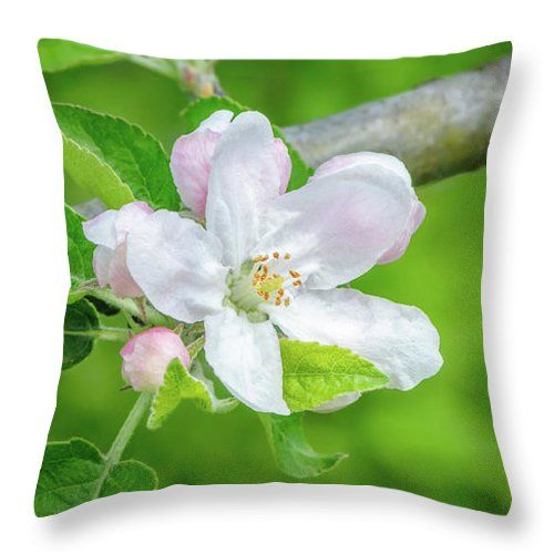 "Springtime - Blooming Tree - 1 Throw Pillow by Jane Star.  Our throw pillows are made from 100% spun polyester poplin fabric and add a stylish statement to any room.  Pillows are available in sizes from 14"" x 14"" up to 26"" x 26"".  Each pillow is printed on both sides (same image) and includes a concealed zipper and removable insert (if selected) for easy cleaning."