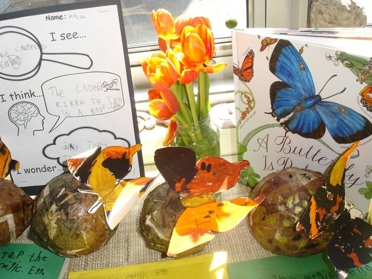 Butterfly inquiry documentation.