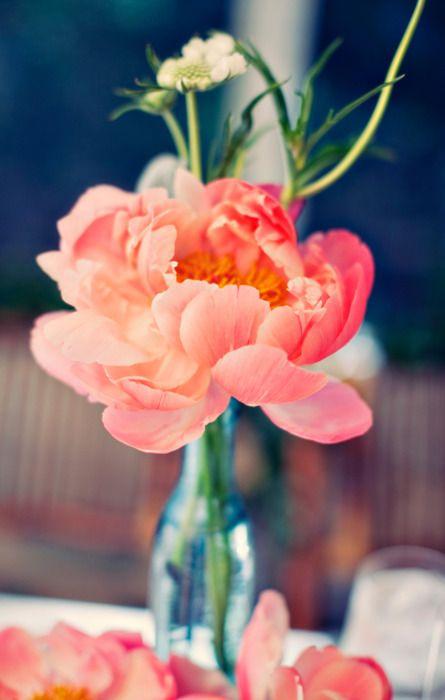 peach beauty