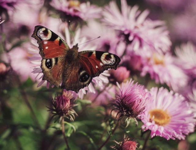 z mojego polowania na motyle, gdy jeszcze pogoda była piękna <3jutro niedziela<3 nareszcie niedziela <3