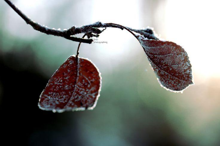 Winter leafs   by Siniirr