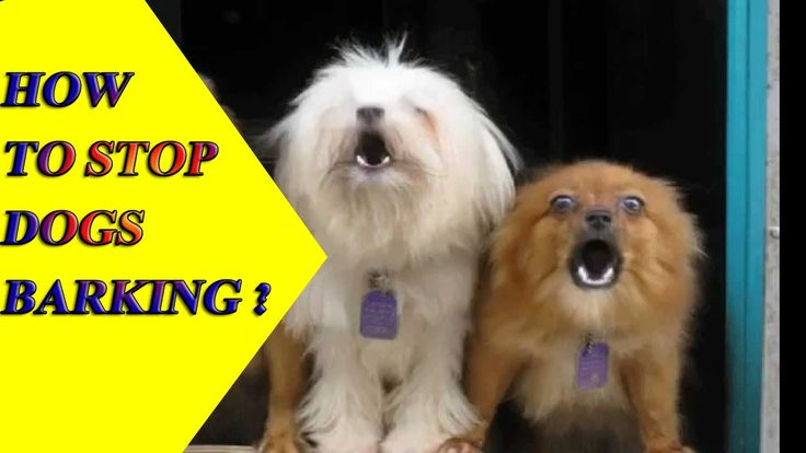 ►►How to stop a Dog from barking | dogs barking | stop dog barking. Watch more dog training videos click here http://mydog-training.com/