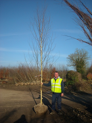 Betula Jackmontii 12-14cm Rootballed From Flannerys Nurseries