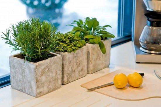 Gesundheit aus dem Blumentopf – im Winter gedeihen Kräuter auf der Fensterbank   – let it grow