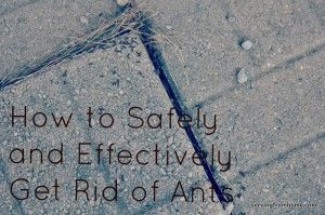 How to get rid of ants - quickly, safely and effectively! #home #household #greensolutions