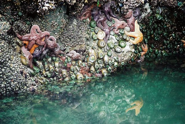 Tofino Tide pools can be seen almost everywhere on Vancouver Island, BC #Tofino #Uclelet