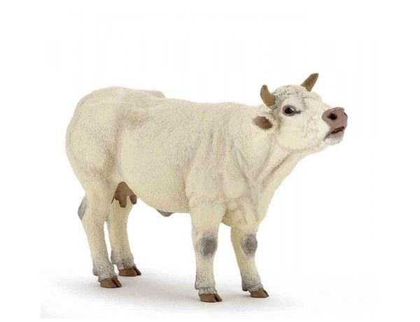 Image of Mooing Charolais Cow