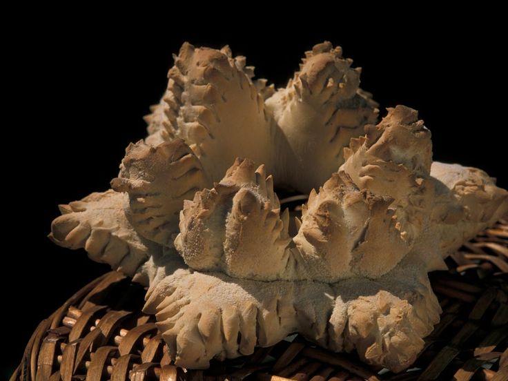 COCCOI Con il nome di Coccoi si indica un pane del Campidano di Cagliari, che si può trovare con altri nomi, in altre zone della Sardegna, come ad esempio in Gallura, dove è chiamato pane de tricu riju, ritenuto speciale per la preparazione della celebre zuppa gallurese. Nel Campidano di Cagliari esiste in due versioni: il pane 'e scetti cioè di farina pregiata, e il pane 'e simbula, quello di semola. Considerato nel.... From Sardinia