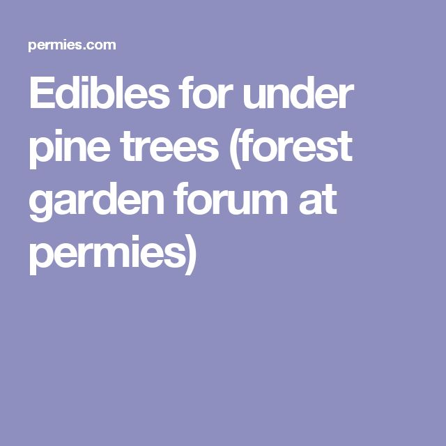 Edibles for under pine trees (forest garden forum at permies)