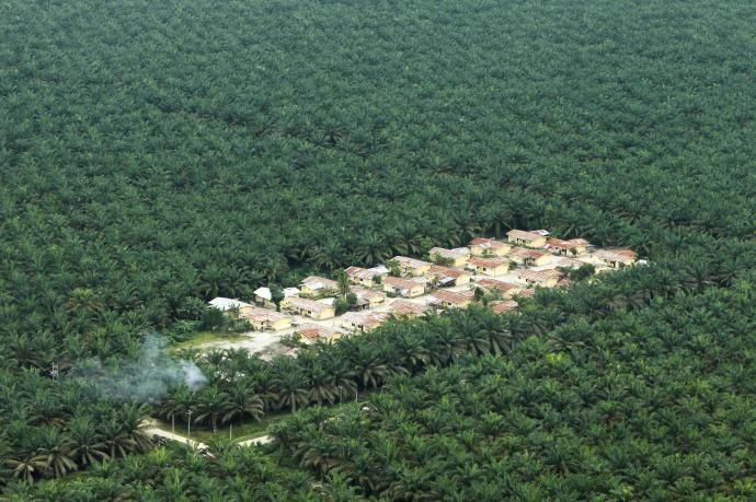 ¿Es saludable el aceite de palma?  http://www.farmaciafrancesa.com