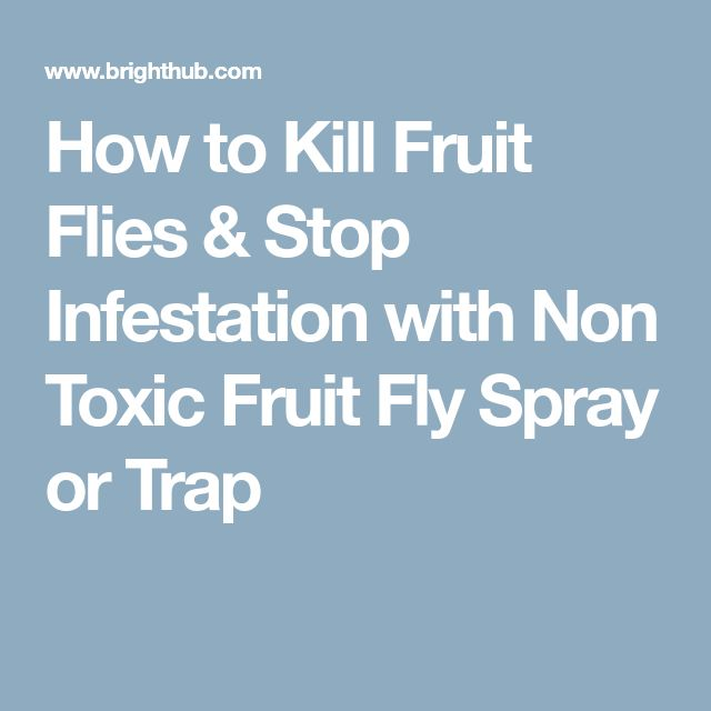 How to Kill Fruit Flies & Stop Infestation with Non Toxic Fruit Fly Spray or Trap