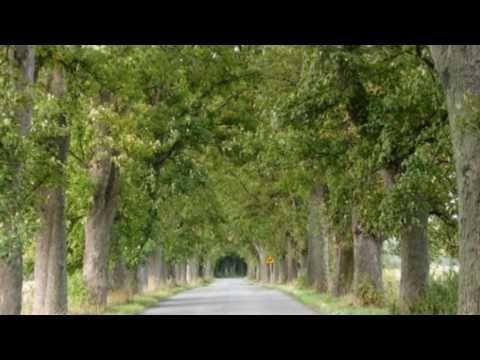 """Biesiadne - """"W zielonym gaju"""" - YouTube"""