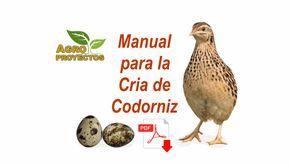 Descarga la guía técnica en PDF para la cria de codorniz: producción de carne y huevo de codornices para fines comerciales.
