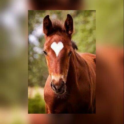 Beutyfull horse