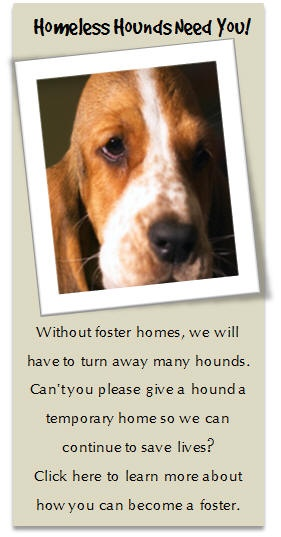 Bassets require a special breed of owner. Basset Hound Rescue of Alabama (BHRA) is an all volunteer, non-profit, dedicated to rescuing and finding loving homes for homeless or needy basset hounds throughout Alabama and surrounding states.
