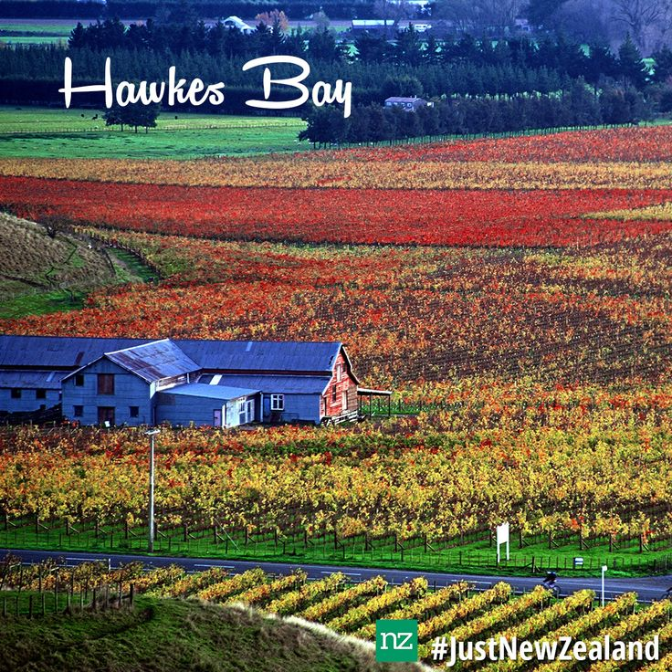 Spread across 360 kilometres of pristine coastline, Hawkes Bay has a wide selection of things to see and do. #hawkesbay #NewZealand #newzealandholiday #nz #nzmustdo