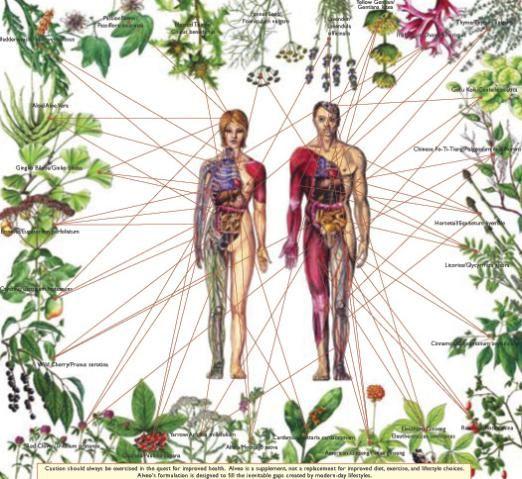 15 Powerful Healing Herbs in Your Kitchen...Herbalist Herbal, Griffin Master, Master Herbalist, Heather Griffin, Lifestyle Consultant, Herbal Healing, Nature Healing, Health Life, Healing Herbs
