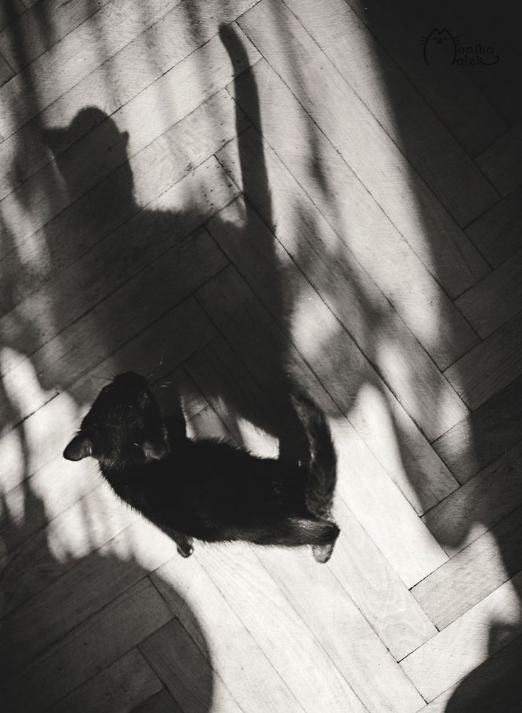 My Black-And-White Catography Reveals Their Hypnotizing Beauty   Bored Panda