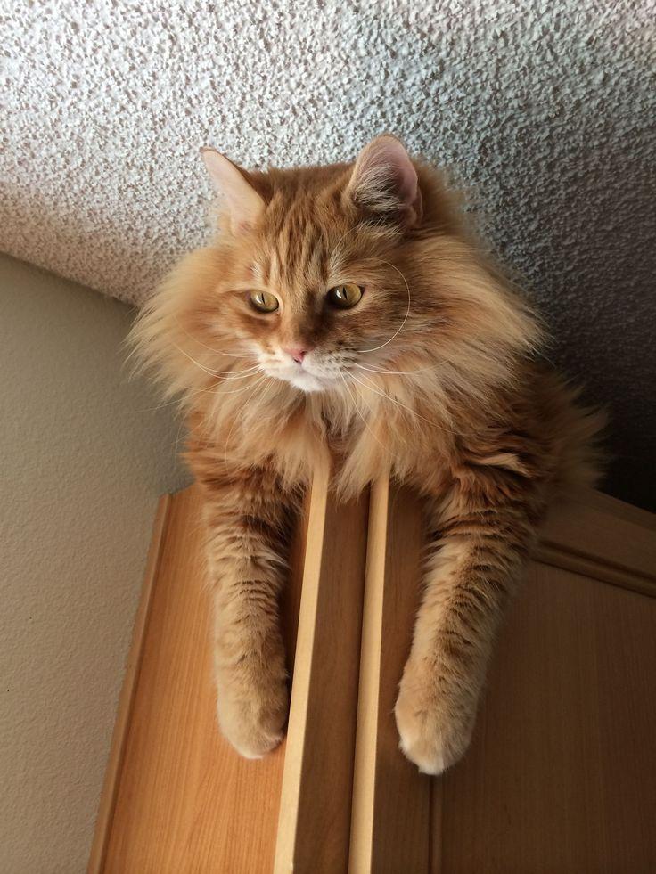 #gatti di vedetta sugli armadi.