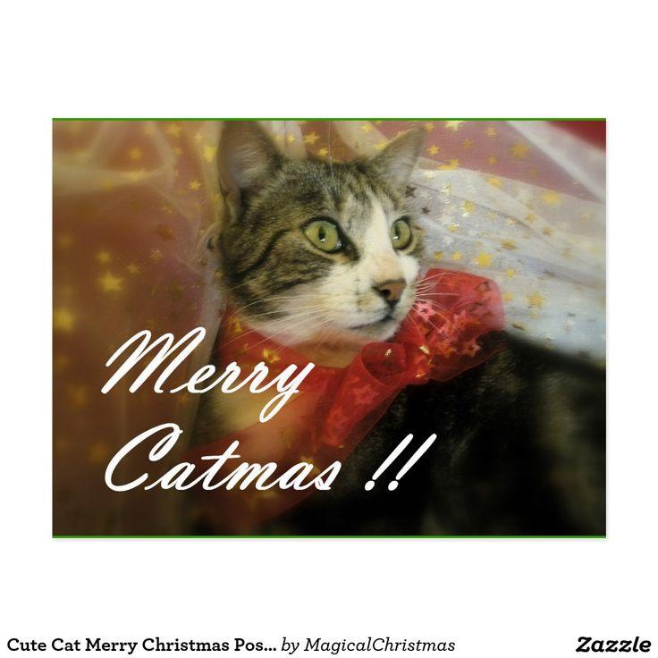 Cute Cat Merry Christmas Postcards