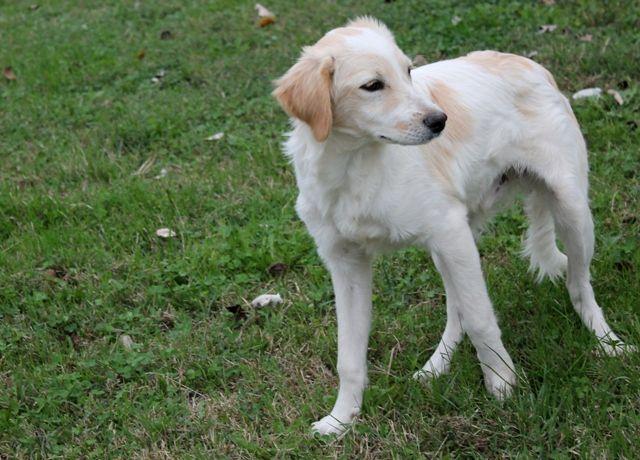 Il piccolo Fiocco cerca ancora casa! info: adozioni@leudica.org