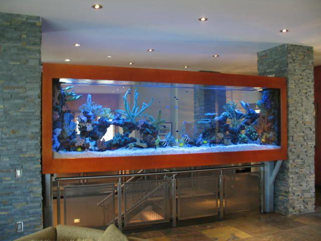 Salt Water Wall Aquarium