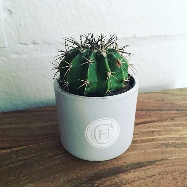 RG @circahome... finished with your fav candle?! Don't let it go to waste, plant a cactus or succulent in your circa jar 🌵 #reuse #recycle #circahome #candle #crafty #diy #cactus #succulents #greenthumb #giftidea #limaandco #loveyourlife