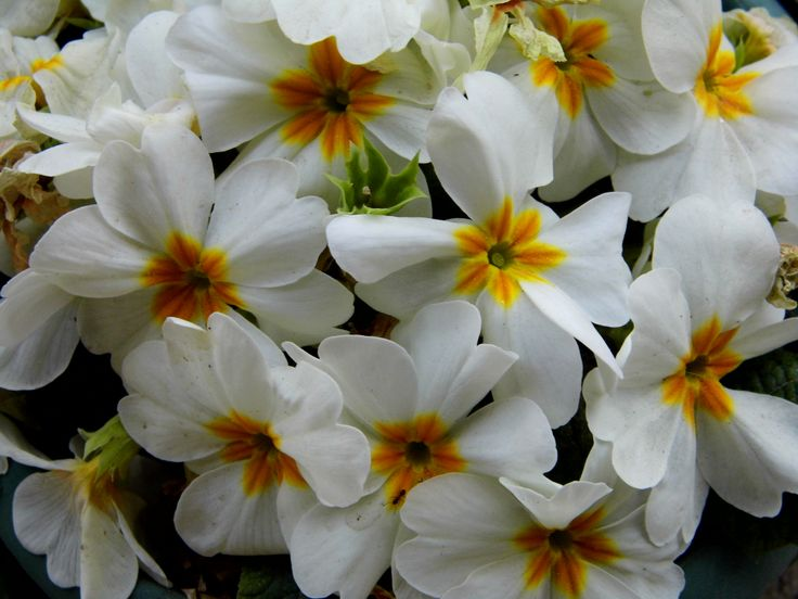 Flowers by S.Özdemir