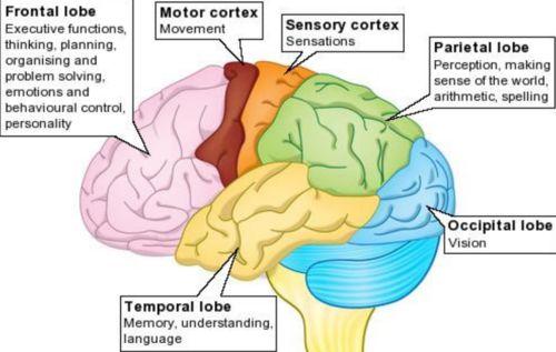 sensory cortex memory recall