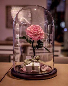 """Rosa real de a """"Bela e a Fera"""" supostamente dura para sempre sem luz solar ou água 08"""