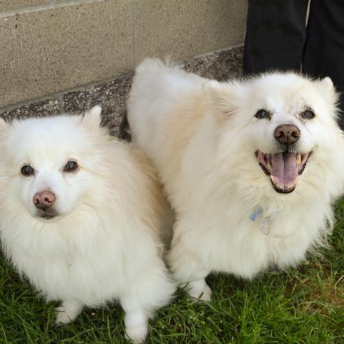 Adopt Sacramento SPCA Animals, Losing a dog, Lost cat