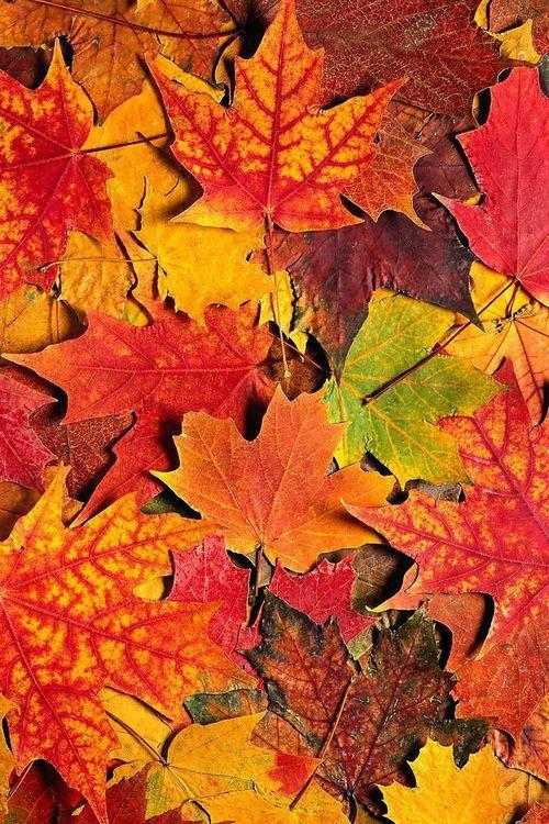 belovedwhisper: Autumn Leaves, Newlook Autumnleaves, Autumn Nature, Fall Autumn, Autumn Colors, Autumn Color Leaves, Fall Color