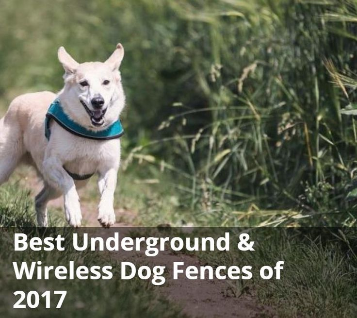 Best Underground & Wireless Dog Fences of 2017 (Review and Buying Guide) | Paw Castle