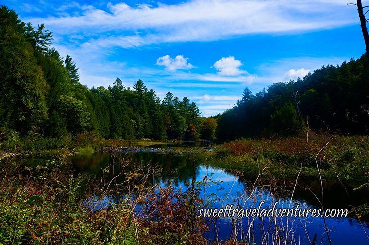 View of Pond From Canopy Boardwalk in Haliburton Forest in Haliburton Highlands, Ontario