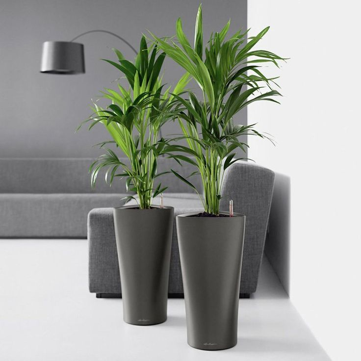 Lechuza Delta Self-Watering Indoor Planter - Whether you place this gorgeous vase in your living room, dining room, study, or bedroom, the classic elegance and sophisticated design of the Lechuza...