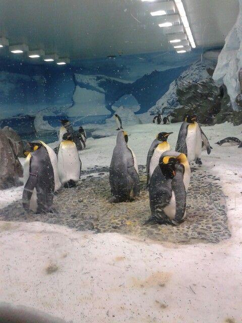 Penguins aquarium #goldcoast #seaworld