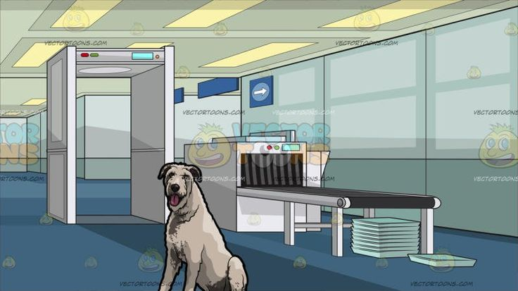 An Adorable Irish Wolfhound Pet Dog With Airport Security Check Background:  A dog with short shaggy pale gray fur droopy ears sits on the floor while parting its lips to reveal a pink tongue and An airport security check with a white metal detector luggage scanning machine with a gray conveyor belt light teal trays stacked in top of one another blue carpet paneled ceiling
