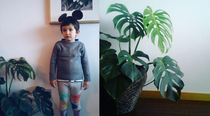 Plantas caseiras - house plants