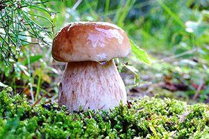 Грибные палочки – удобная технология в грибоводствена abekker.ru