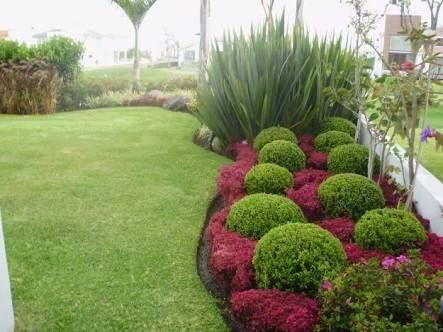 Resultado de imagem para jardin con palmera pindo