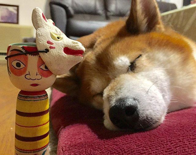 お裁縫に夢中になっていたら、散歩待ちくたびれて寝てしまいました🐕 #こけし#たこ坊主 #狐面#愛犬#アル#雑種#散歩#待ちぼうけ