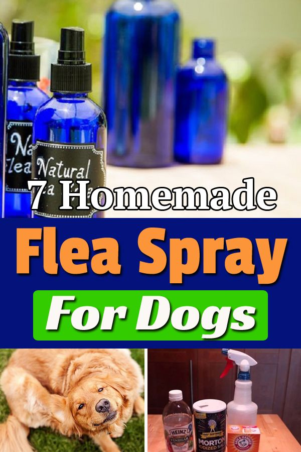 Homemade Flea Spray For Dogs Is An Effective Way To Get Rid Of Bugs And Fleas From Your Pet Flea Spray For Dogs Homemade Flea Spray Flea Spray