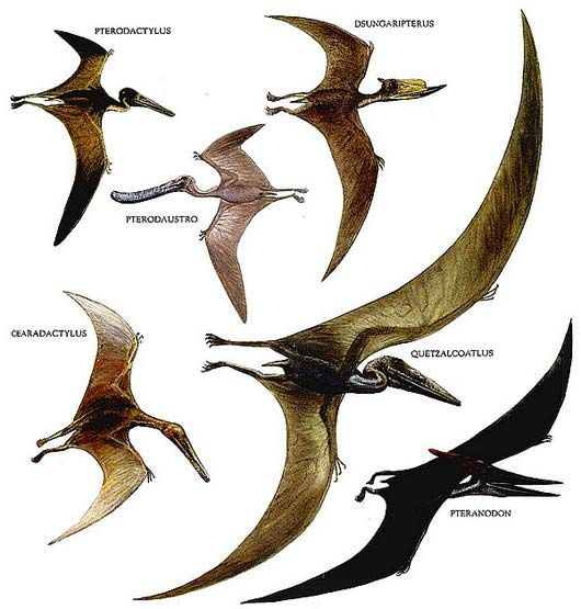 Ancient and extinct reptile types the dinosaurs the o - Dinosaur volant ...