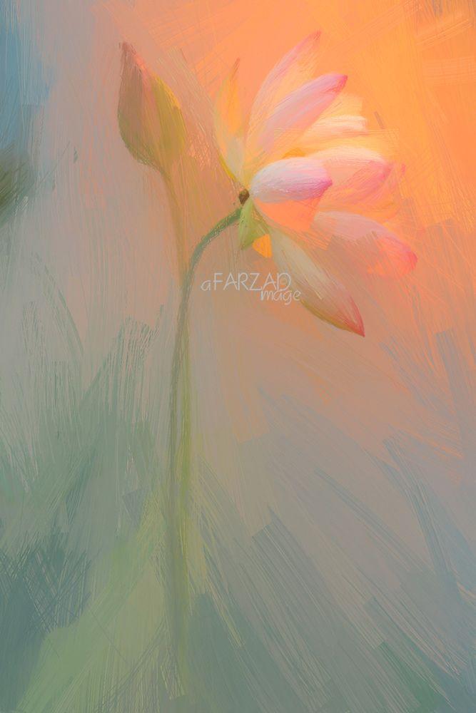 Lotus Flower Paintings - Image Based - Akvis Oil Paint Filter - akvis.com/en/oilpaint/index.php DD0A2575-1-akop-ss-l-ls4-1000