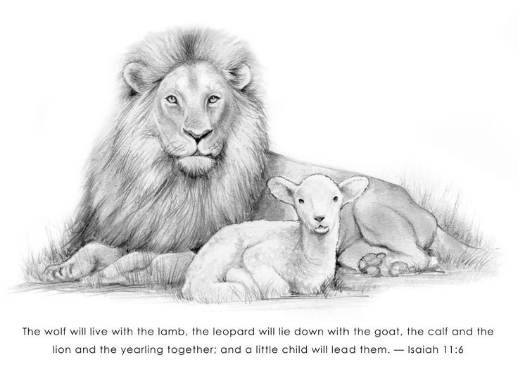 lion pencil drawings | Lion and Lamb Pencil Art