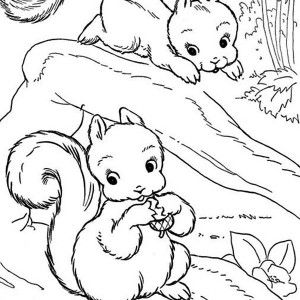 Squirrel Two Baby Squirrel Coloring Page Two Baby Squirrel Coloring Page Squirrel Coloring Page Coloring Pages Online Coloring Pages