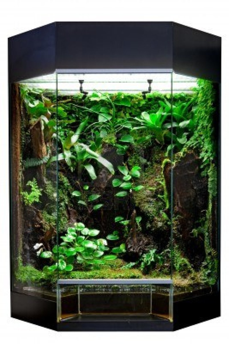 terrarium or vivarium for keeping rainforest animal such as poison frog and  lizards. Glass habitat pet tank with green moss and jungle vegetation. - 51 Best Awesome Reptile Terrariums & Vivariums Images On Pinterest