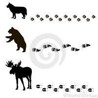 животные-их-сле-ы-21407611.jpg
