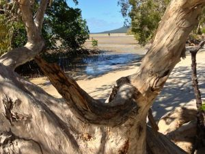Elim Beach, Tropical North Queensland  - Join us on a 5 days 4 nights expedition Come celebrate the world's oldest living culture.  Laura Dance Festival