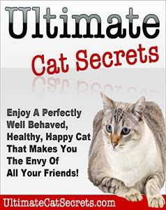 How you can Educate Your Cat in the future When Known as - https://glimpsebookstore.com/how-to-educate-your-cat-to-come-when-known as/